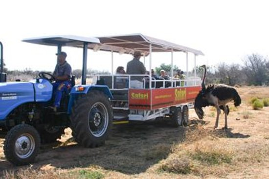 Safari Ostrich Show Farm: Tractor Tour at #Safari Ostrich Farm