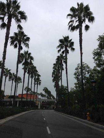 Hotel Indigo Anaheim : Cercano a Disney