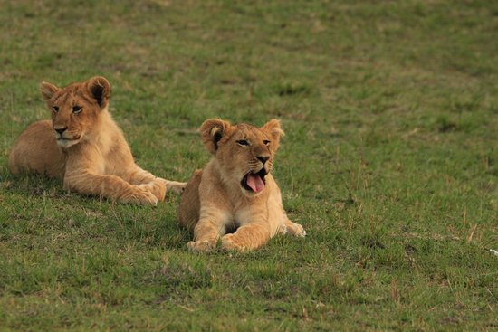 Explorer Kenya: soooooo cute