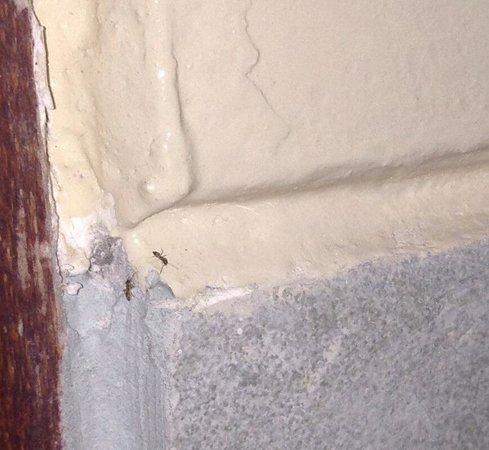 Al-Isha: Beaucoup de fourmis dans la salle de bain. Un nid dans le cadre de porte.