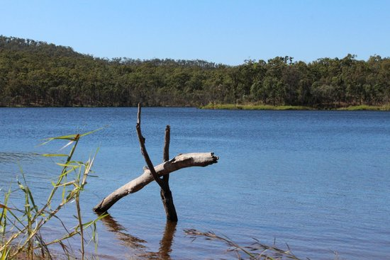 Mount Morgan, Australia: Log at the dam