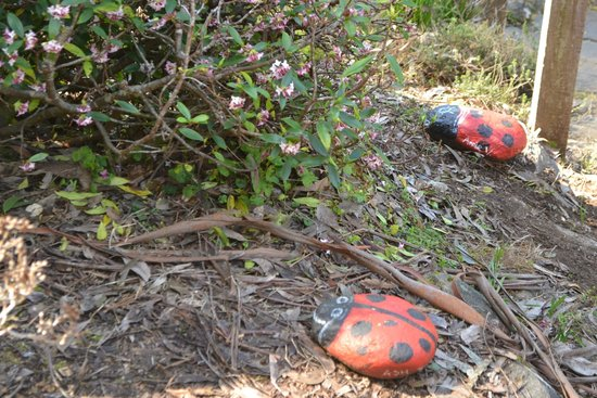 National Rhododendron Gardens: interesting lady bug