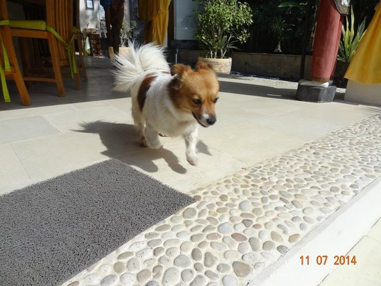 Minabali Bunga'lo : Nina the dog running after her toy