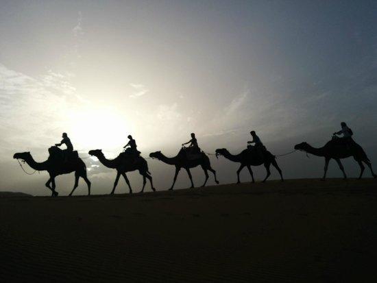 Merzouga Desert : Los dromedarios