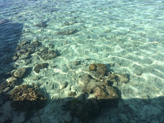 Adaaran Club Rannalhi: Crystal clear water