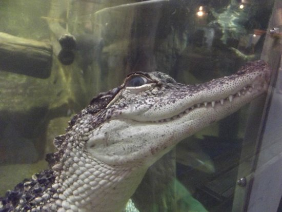 National Aquarium: smiiile