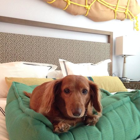 Kimpton Surfcomber Hotel: Wiener dog in room.