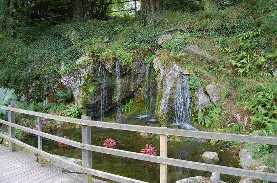 Blarney Castle & Gardens: les jardins d'eau dans the Rock close