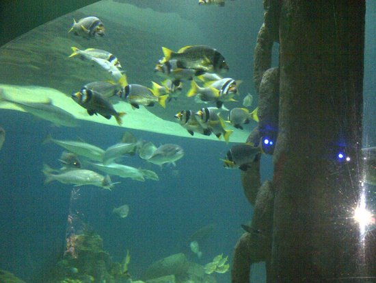 Maritime Museum: Inside tunnel, many kind of fish around you