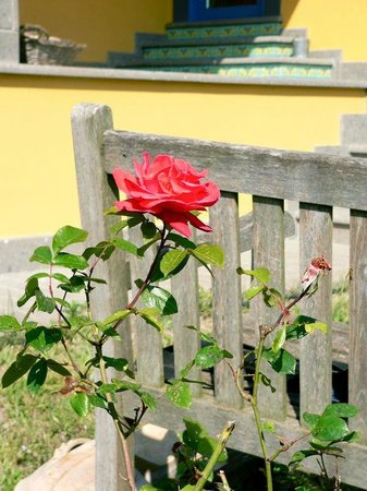 La Casa Del Pettirosso: giardino