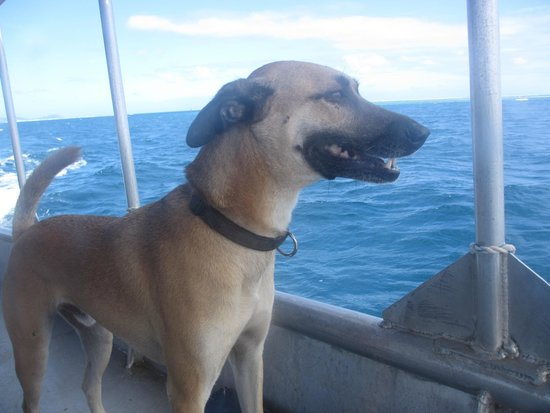 Waidroka Bay Resort : The very friendly dog called Dogg