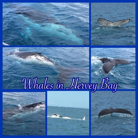 Quick Cat II - Hervey Bay Whale Watch: Collage