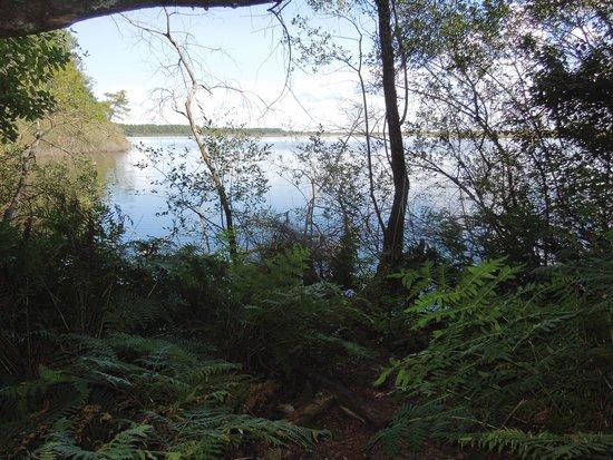Réserve Naturelle de l'Etang de Cousseau