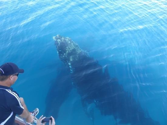 Freedom Whale Watch: our wonderful skipper