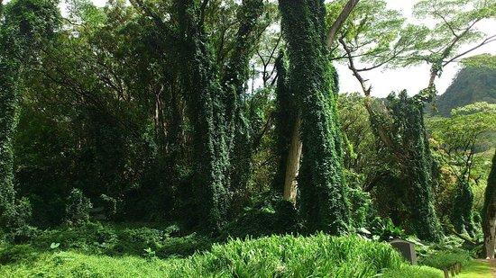 Manoa Falls: 緑いっぱい♪