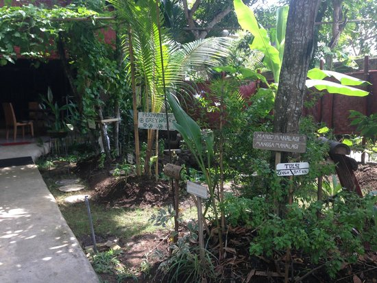 Serenity Eco Guesthouse and Yoga : garden