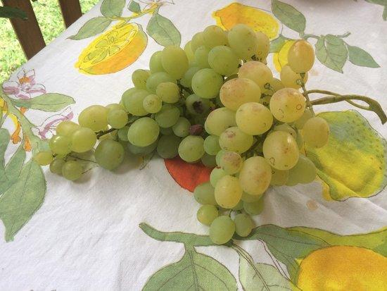 Agriturismo Pratovalle: Uva della pergola davanti casa