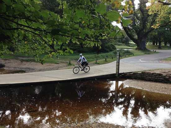 Forest Leisure Cycling: tranquil Moyles Court, Linwood