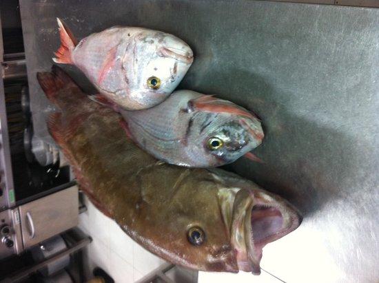 Restaurant Cinque Archi: Il pesce ai cinque archi.
