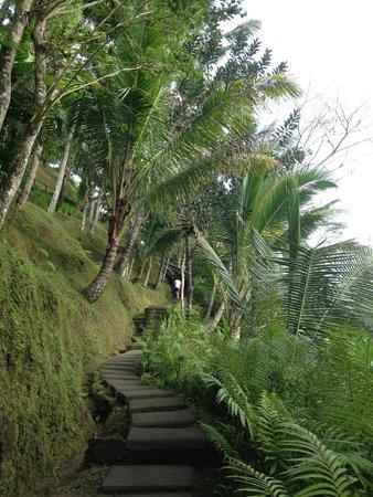 COMO Shambhala Estate : Walking trail