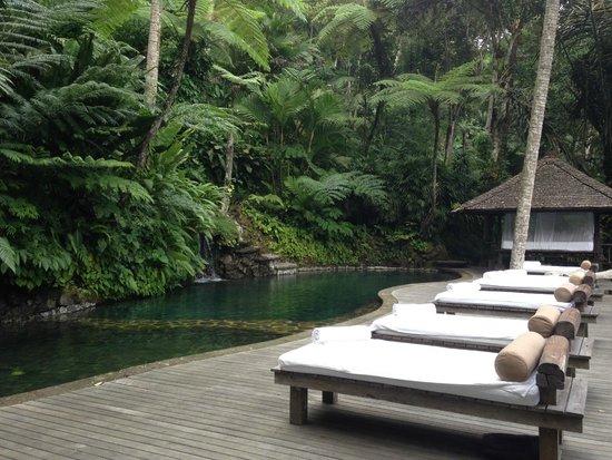 COMO Shambhala Estate : Spring pool