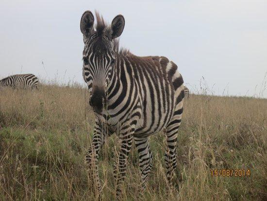 Parc national de Nairobi : Zebra