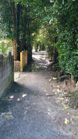 Bise Fukugi Tree Road : 並木道 スタート