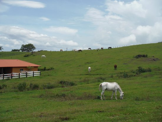 Costa Rica Private Tours: Borinquen Horseback Riding