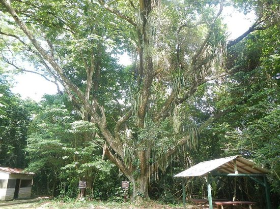 Belmopan, Belize: Guanacaste park
