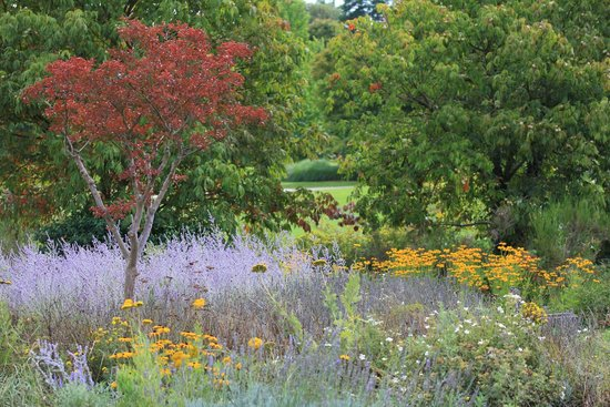 Arboretum de la Vallée-aux-Loups: Arboretum 31 Aout 2014
