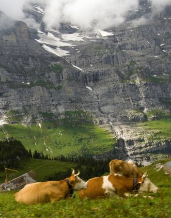 Kleine Scheidegg: Um dos lugares mais lindos que já visitei