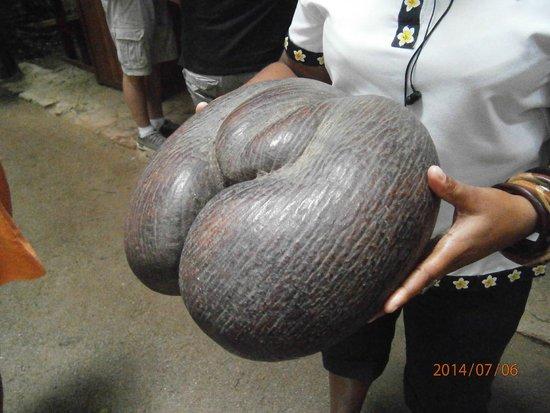 Vallee de Mai Nature Reserve : Il Coco de Mer!!!