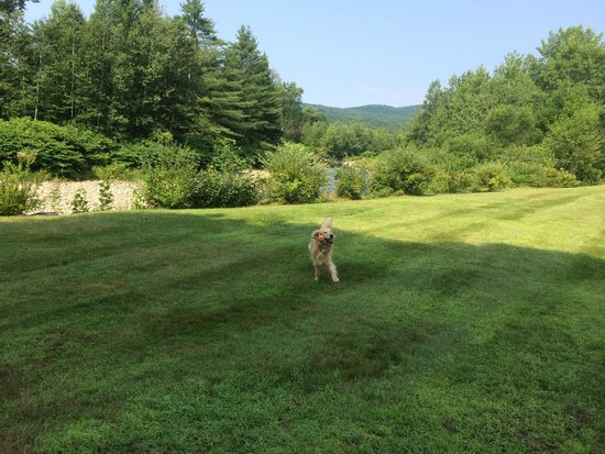 Sun & Ski Inn and Suites : Playing outside the back door! My dog is VERY well trained - ALWAYS comes when called!