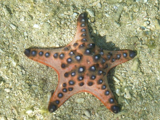 Siladen Resort & Spa: stelle marine a riva sulla spaiggia