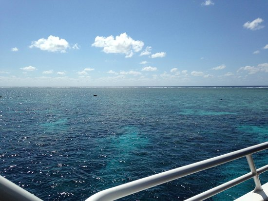 Blue Dive Port Douglas: GBR!