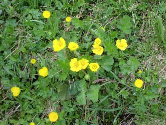 Гриндельвальд, Швейцария: 黄色が多かった
