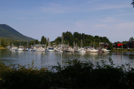Ucluelet Campground: View from RV pitch