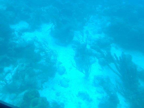 De Palm Tours: Atlantis Submarines Expedition: the coral
