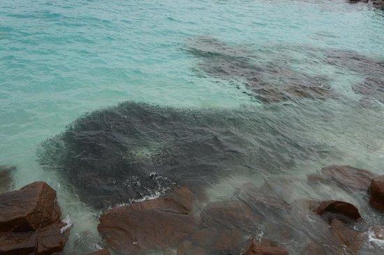 Laguna Redang Island Resort: Gigantic school of small fishes (anchovies?)