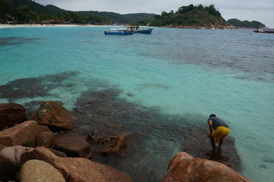 Laguna Redang Island Resort: Look at how huge the school of fish actually is