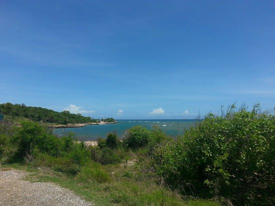 Playa de Guanica, Puerto Rico: Across the road from Bosque Seco