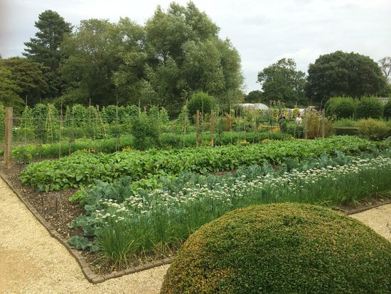 Belmond Le Manoir aux Quat'Saisons: The vegetable garden