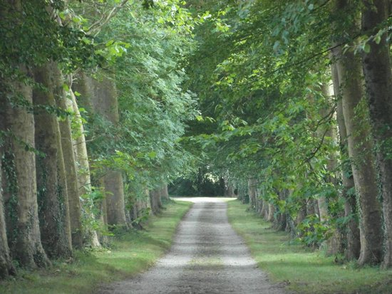 Chateau de Flottemanville : Viale di accesso