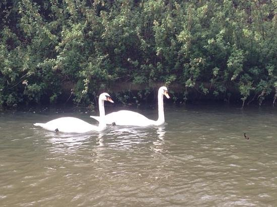 The Runnymede on Thames: on the water