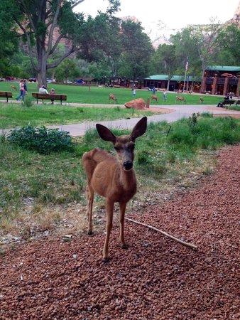 Zion Lodge: Visiteur pendant que nous sommes sur la terrasse