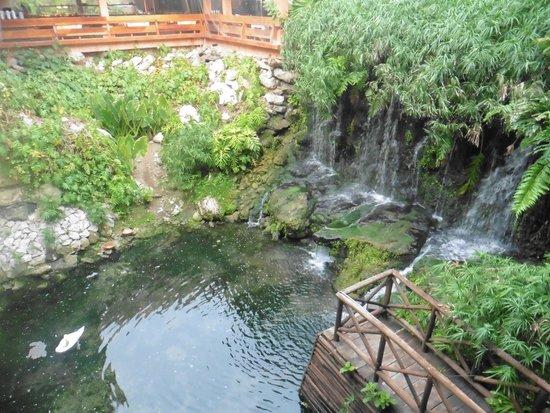 Iberostar Tucan Hotel : Fauna en el hotel