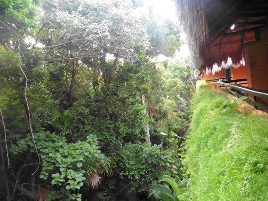 Iberostar Tucan Hotel : Vistas desde habitacion 1452