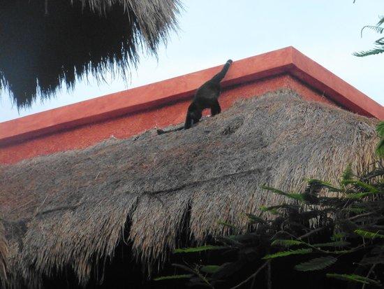 Iberostar Tucan Hotel: Fauna en el hotel