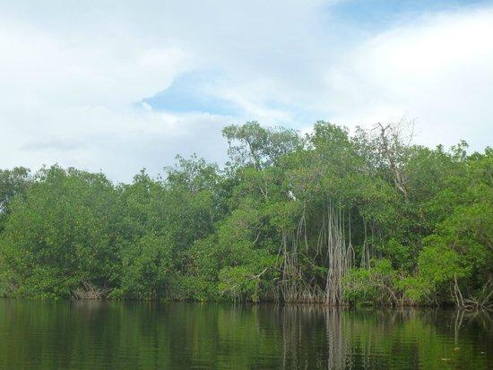 Tour the Glades : Palétuviers