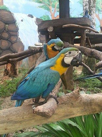 Langkawi Wildlife Park: Vs les verrez a moins de 50 cm ! Bruyants mais tellement impressionnant